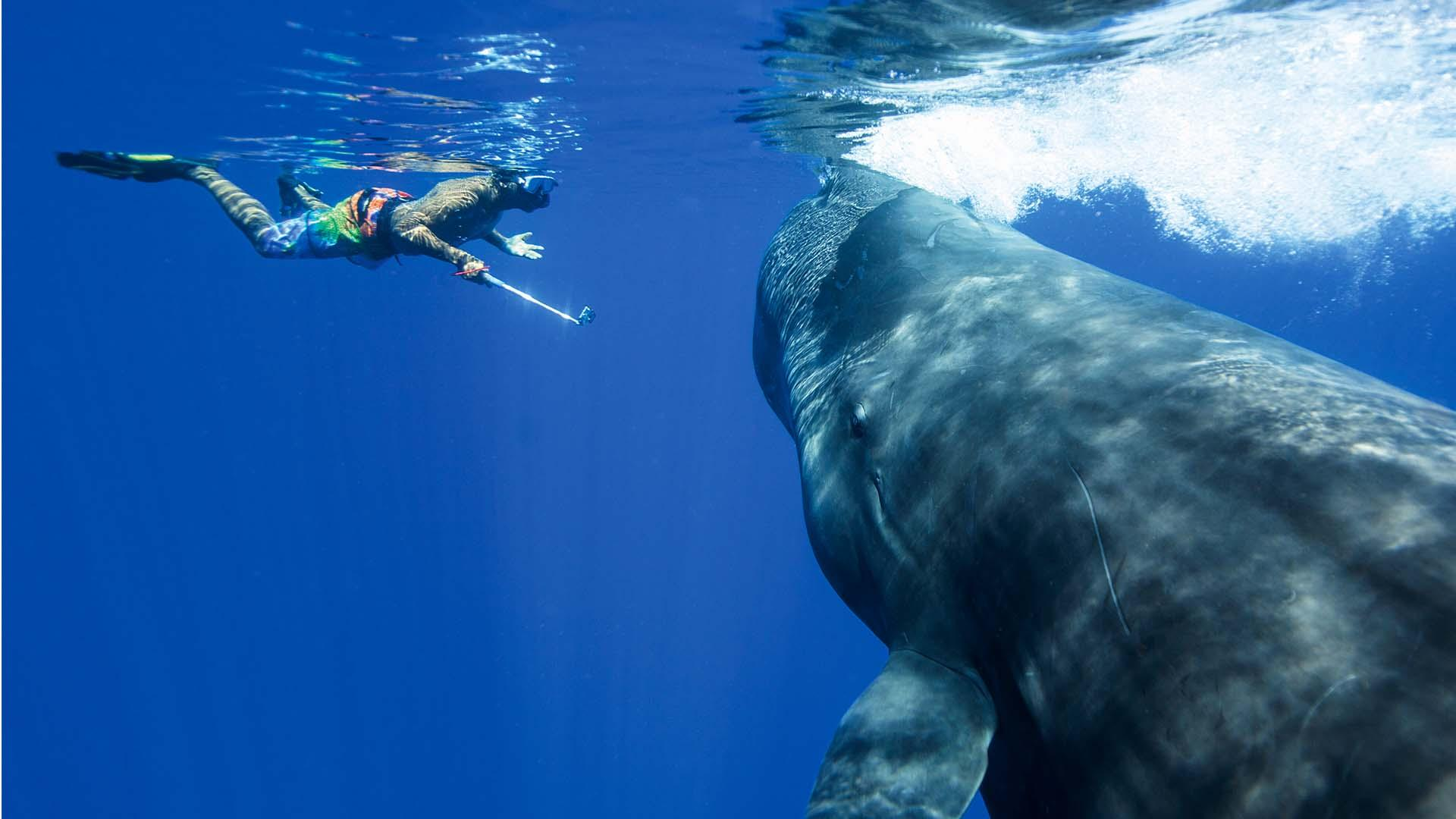 a diver with a whale in Dominica