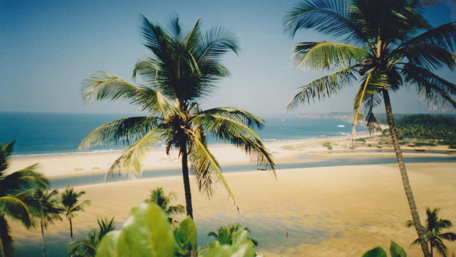 Palms and the beach in Goa, India
