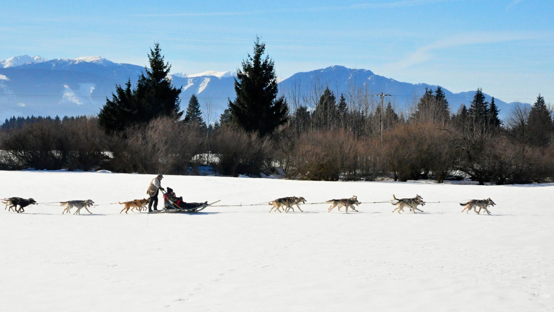 Best ski and snowboard holidays: dog-sledding in Slovakia