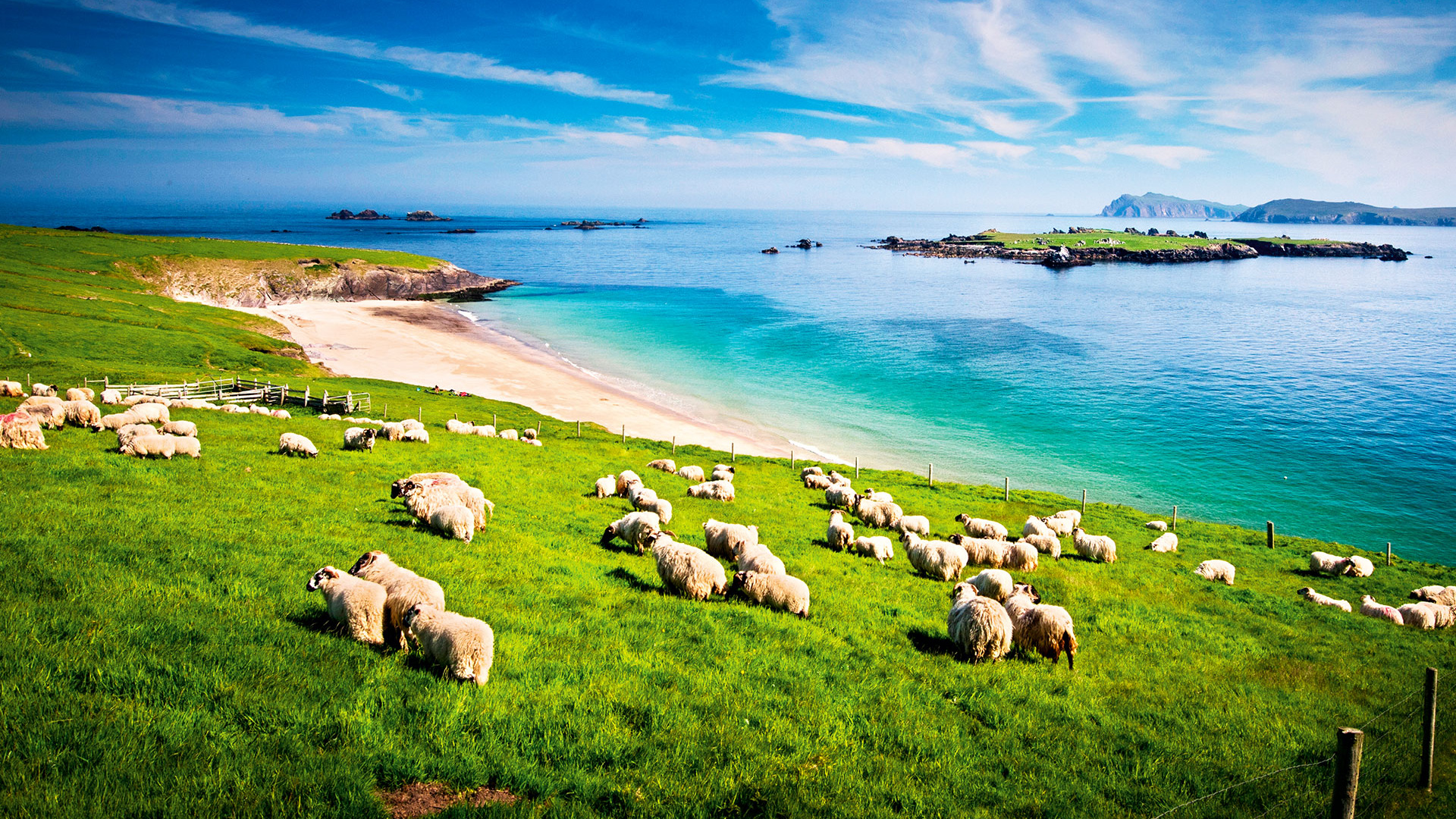 Sheep on a hillside in County Kerry