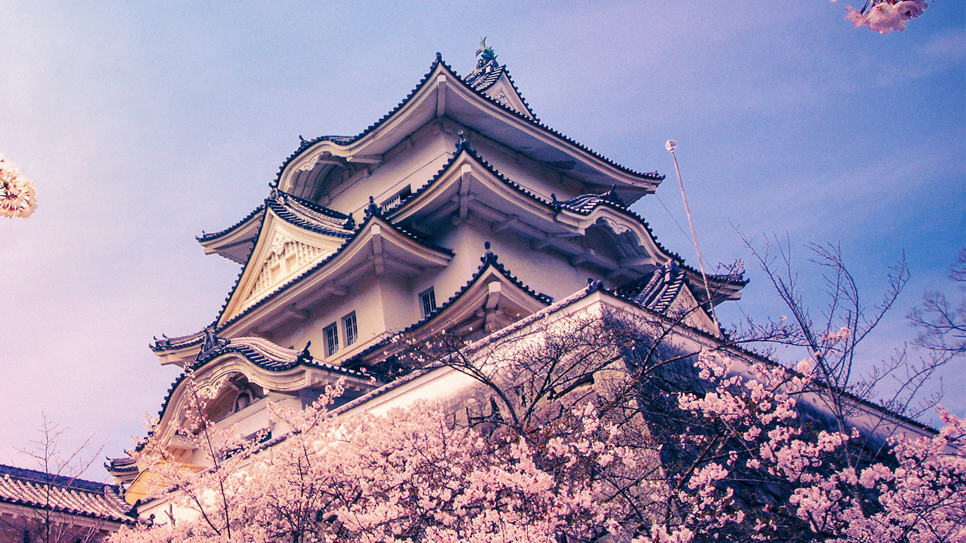Cherry blossom at Iga Castle