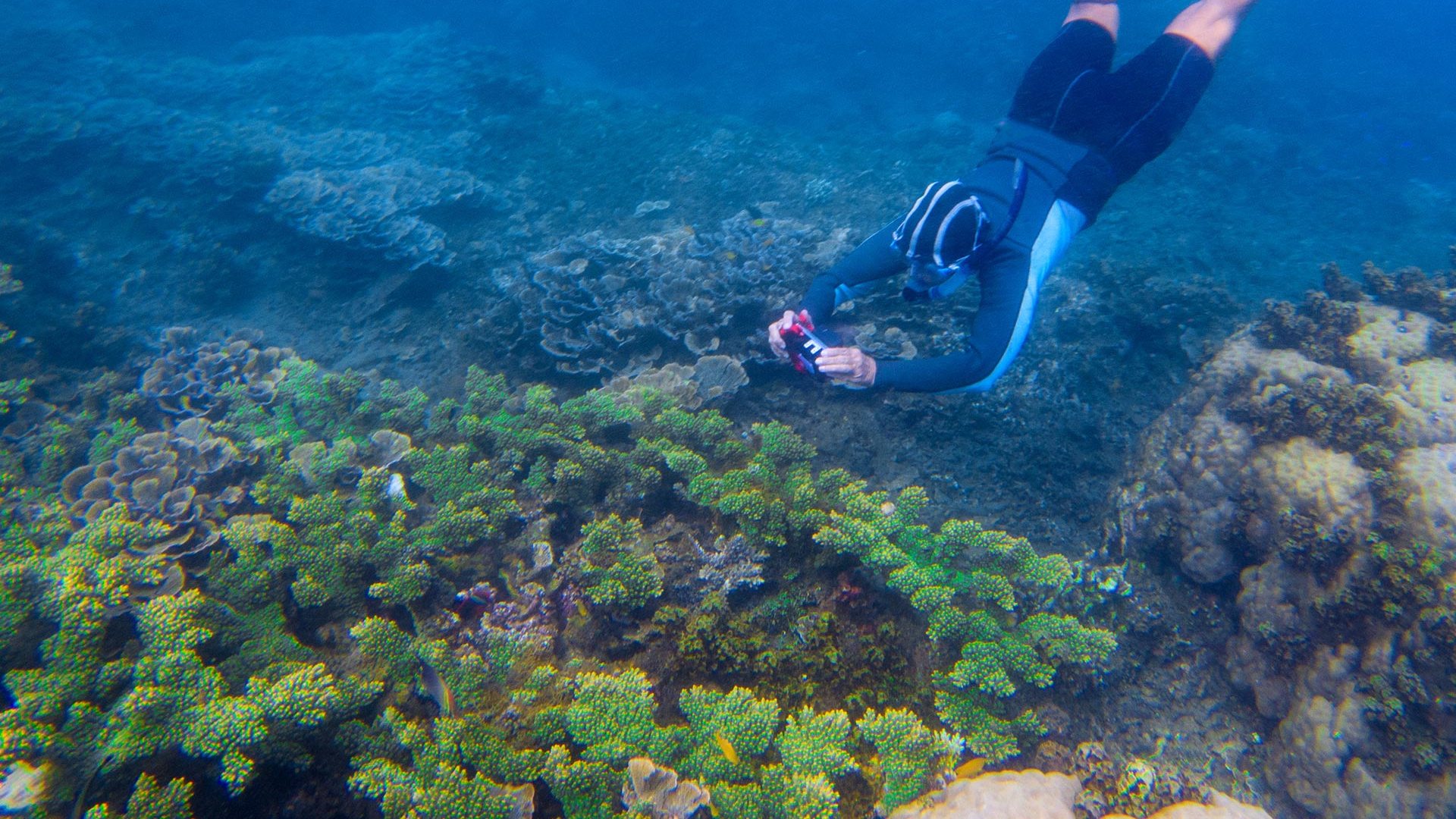 Photographing a coral reef while snorkelling