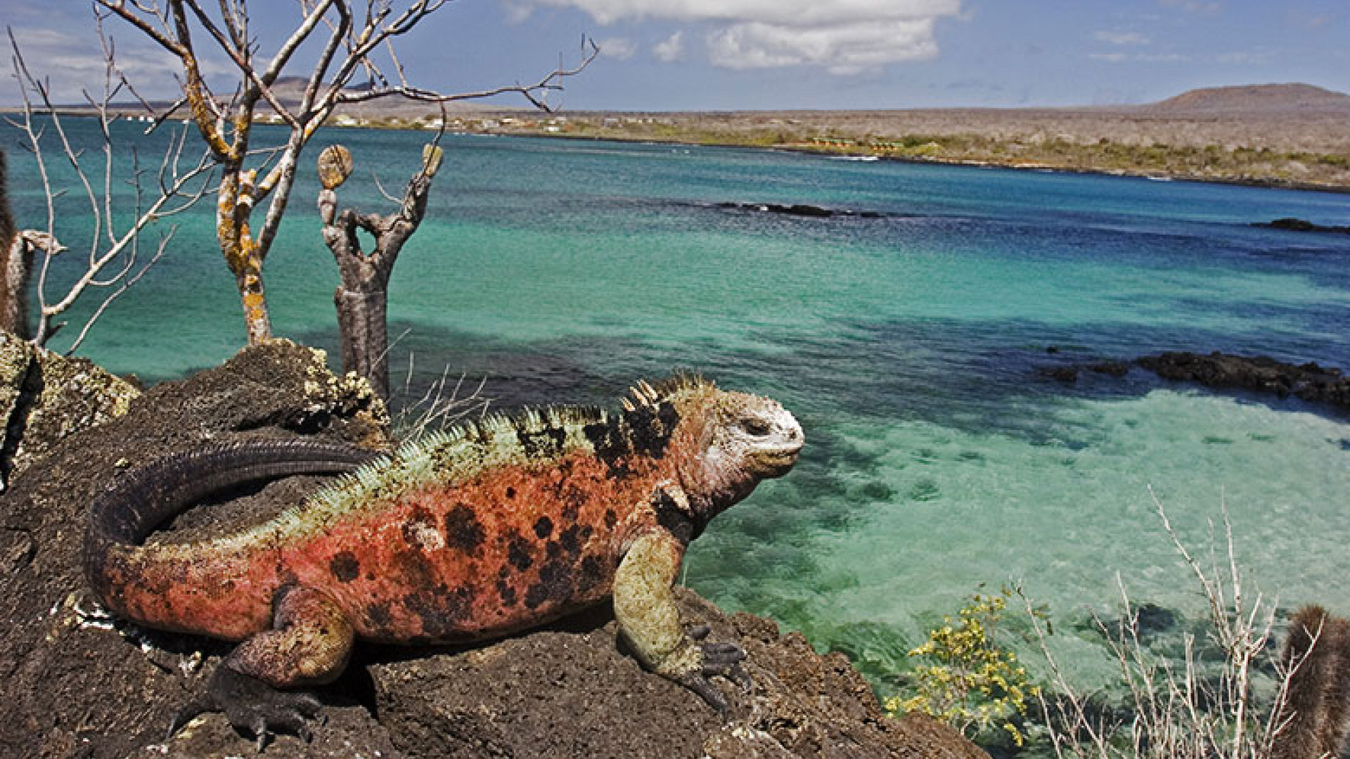 galapagos-wildlife