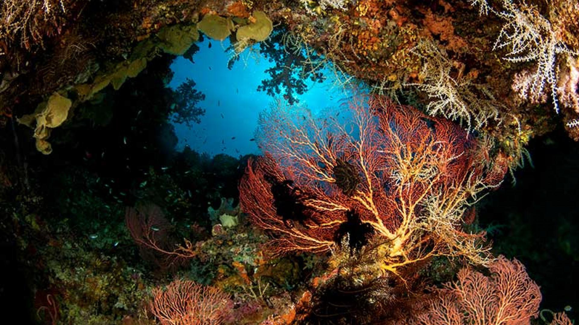 beautiful-corals-in-new-britain