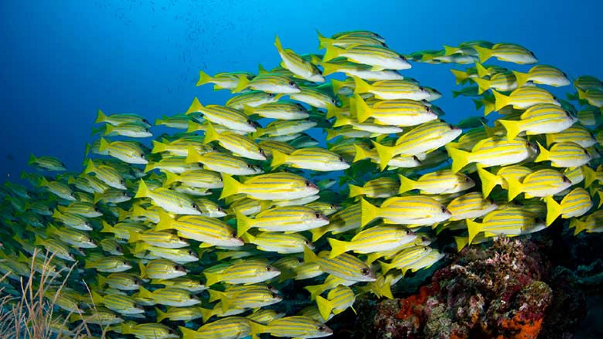 Dive-Maldives