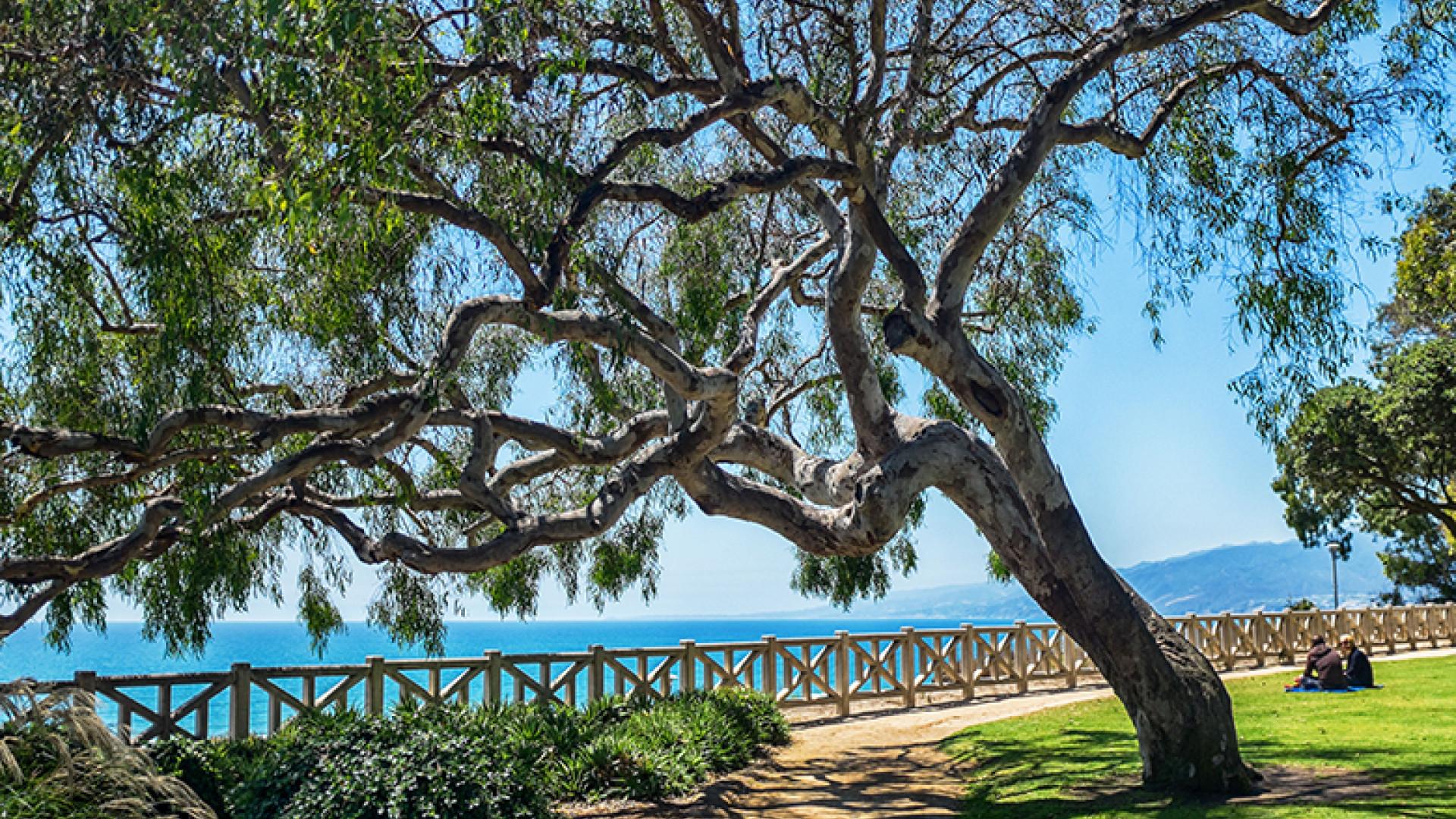 Esplanade-Tree