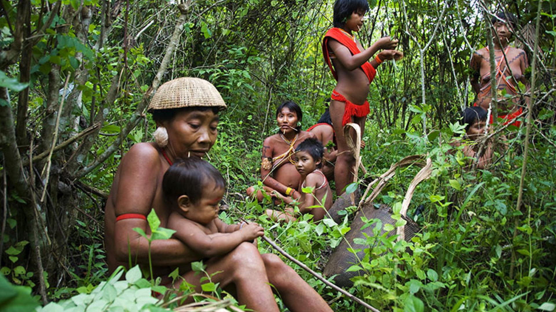 yanomamo people of the rainforest essay