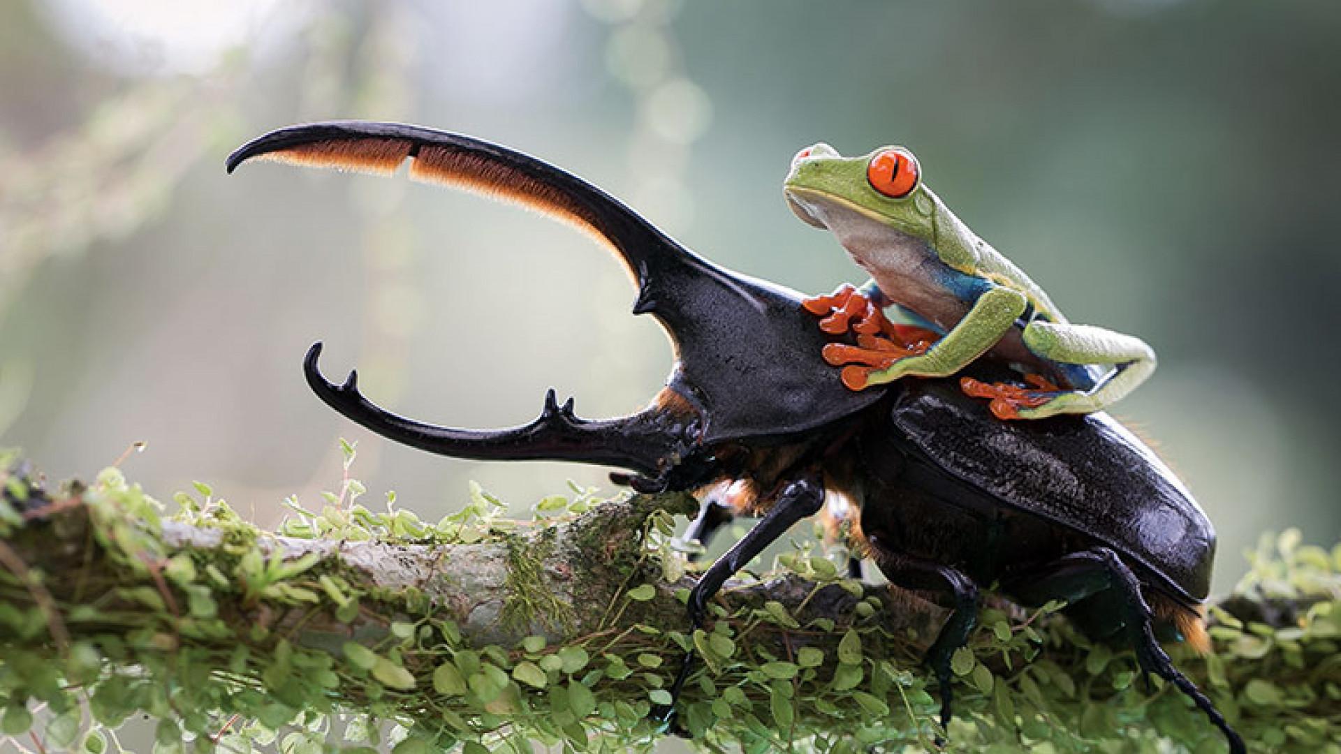Nicolas_Reusens_Boden,_Sweden,_Entry,_Open_Nature_&_Wildlife,_2014_Sony_World_Photography_Awards.jpg_cmyk1