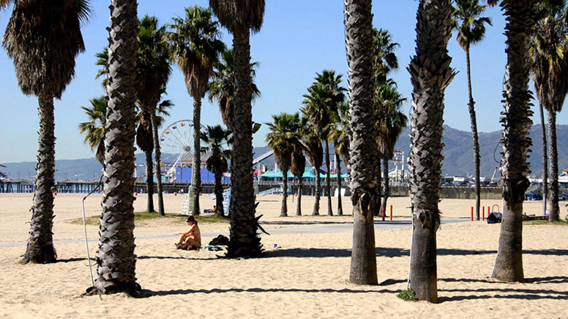 Palm-Trees-on-Santa-Monica-Beach