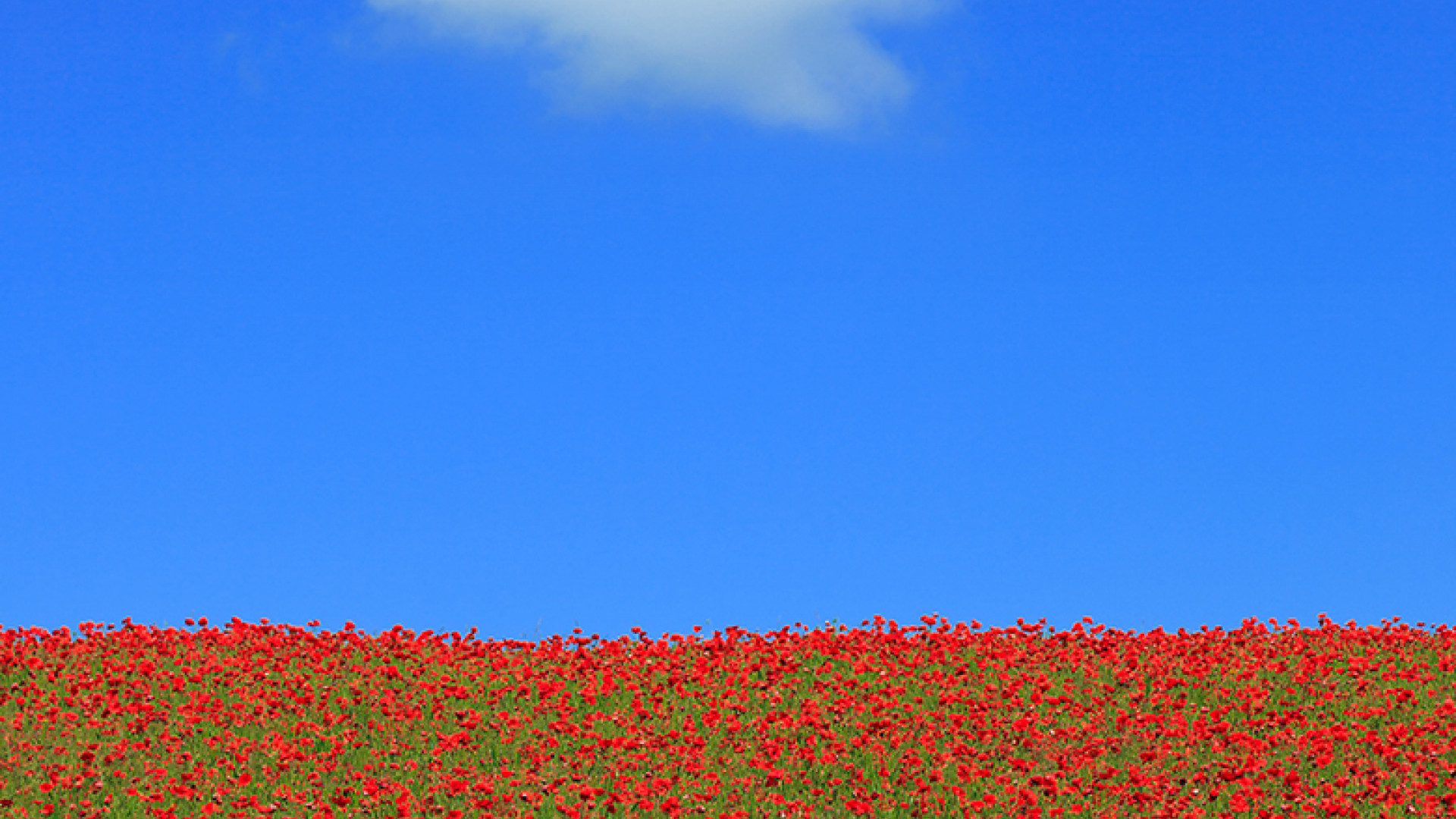 Copy-of-Richard-Tohmas,-Poppies-and-White-Cloud,-Commended,-Classic-View,2012