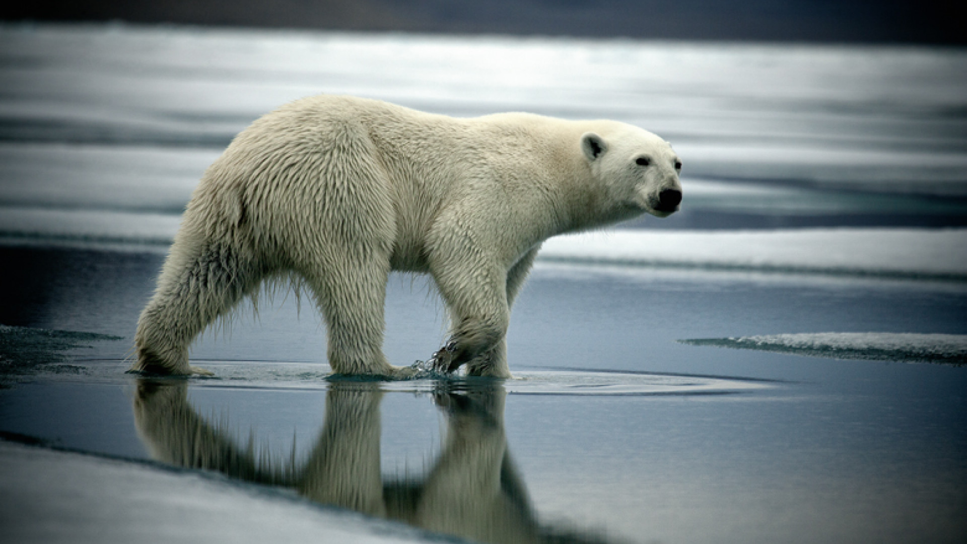 Devon Island, Canadian Arctic