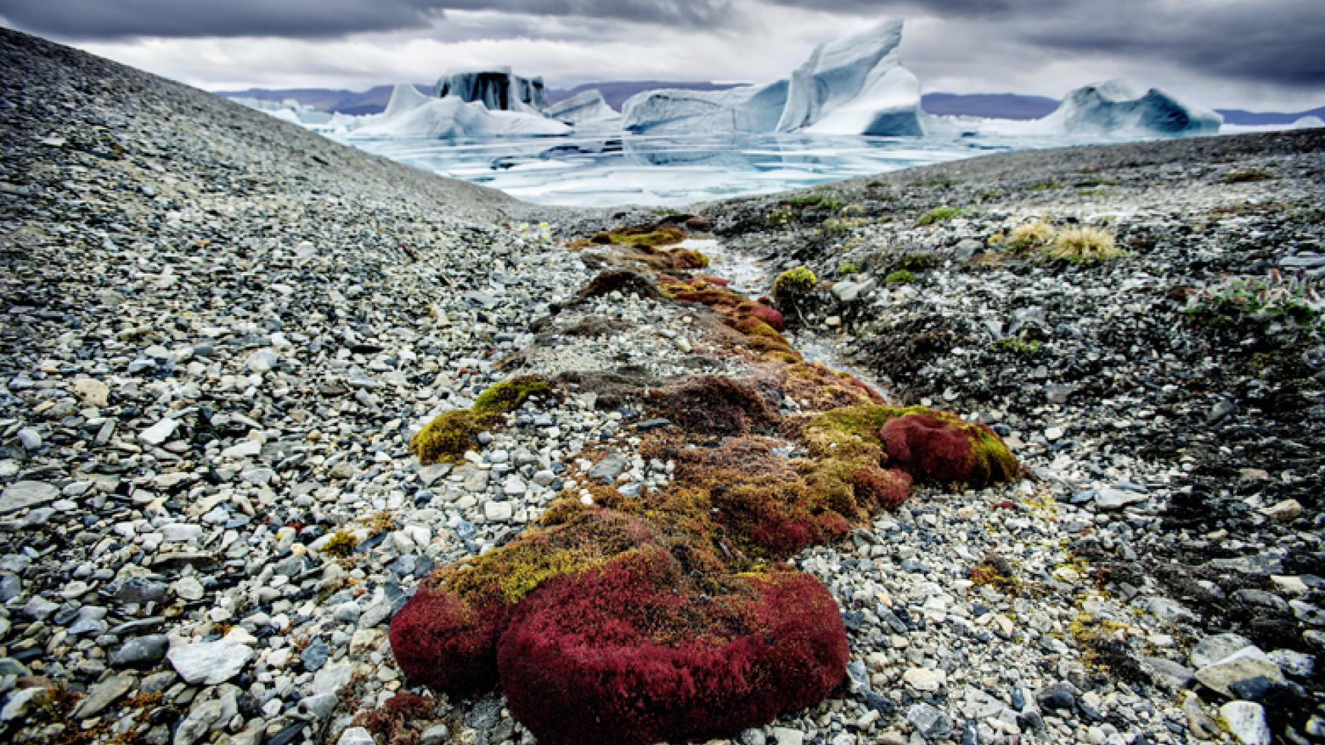Otto Fjord, Canadian Arctic