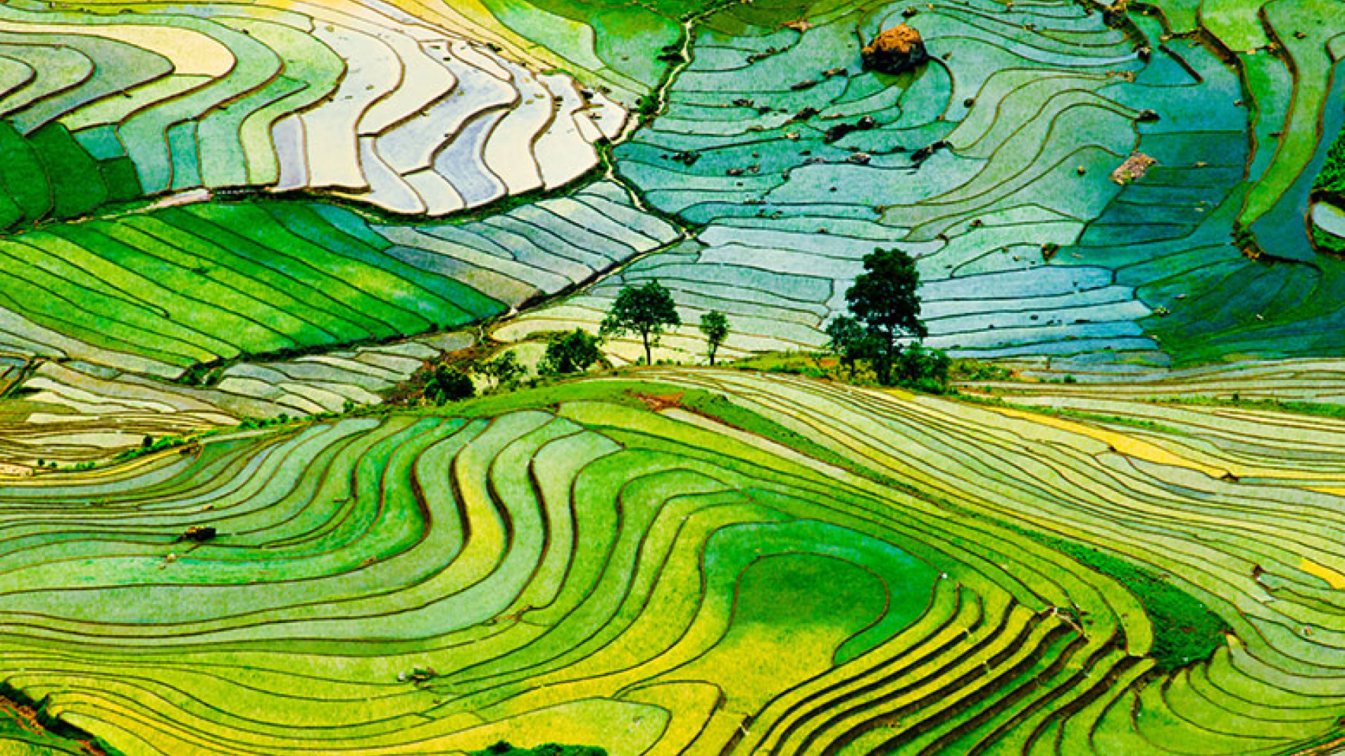 10 mesmerising pictures of ancient rice paddies