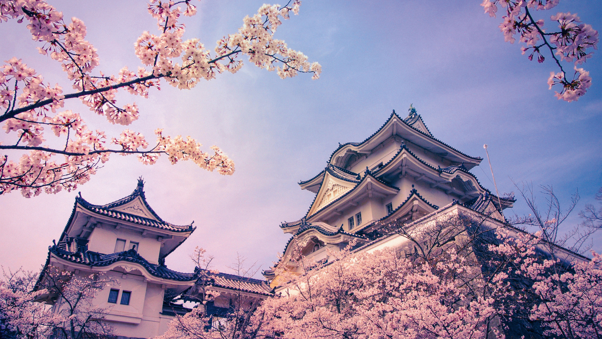 blossoming trees outside a castle in Iga