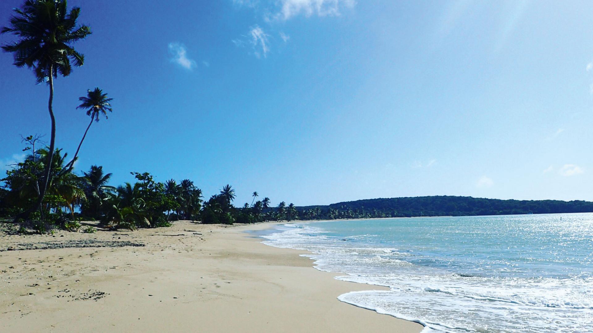 Beach view in Vieques, Puerto Rico