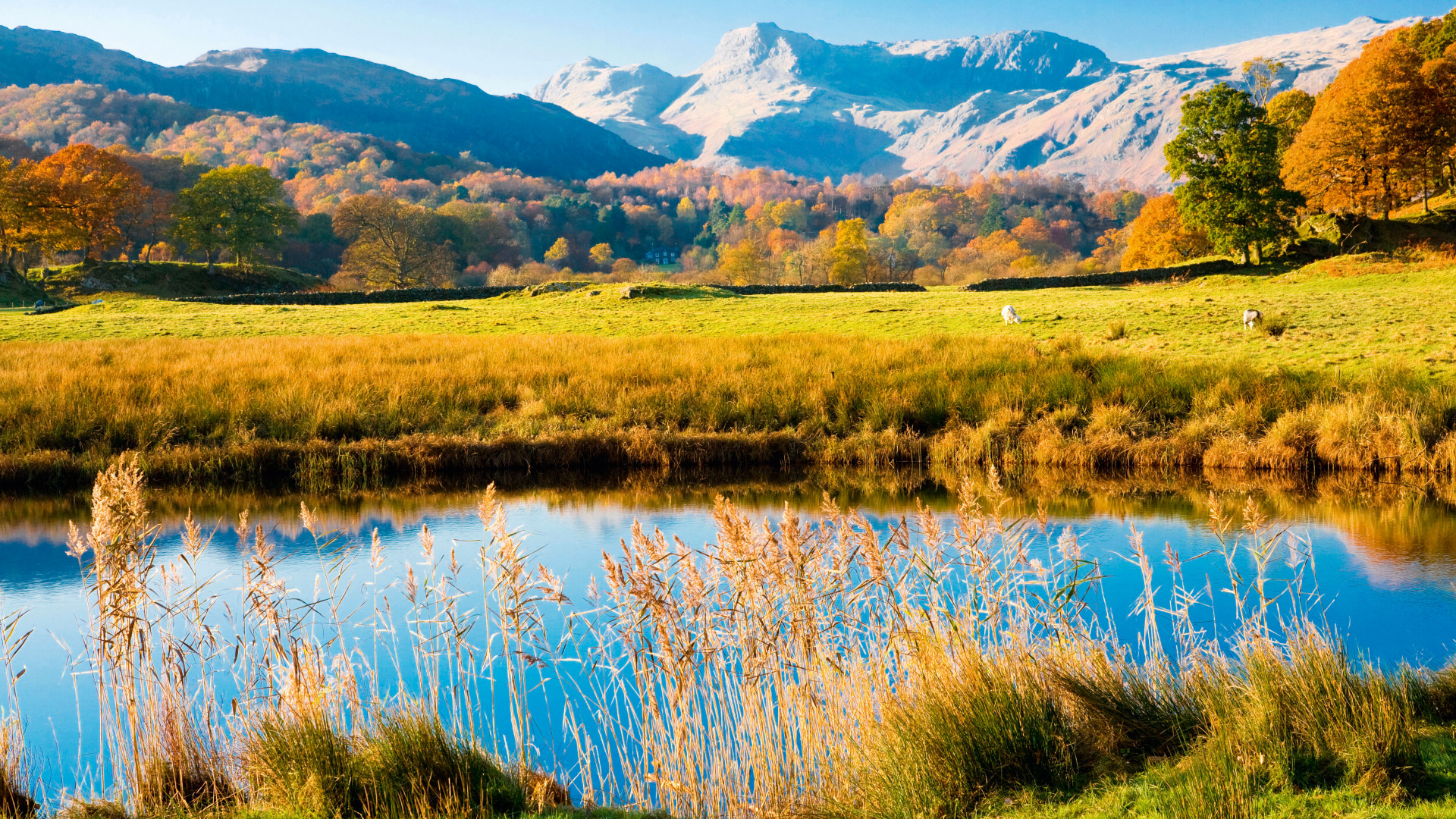 Autumnal view of river and reed bed in Cumbria