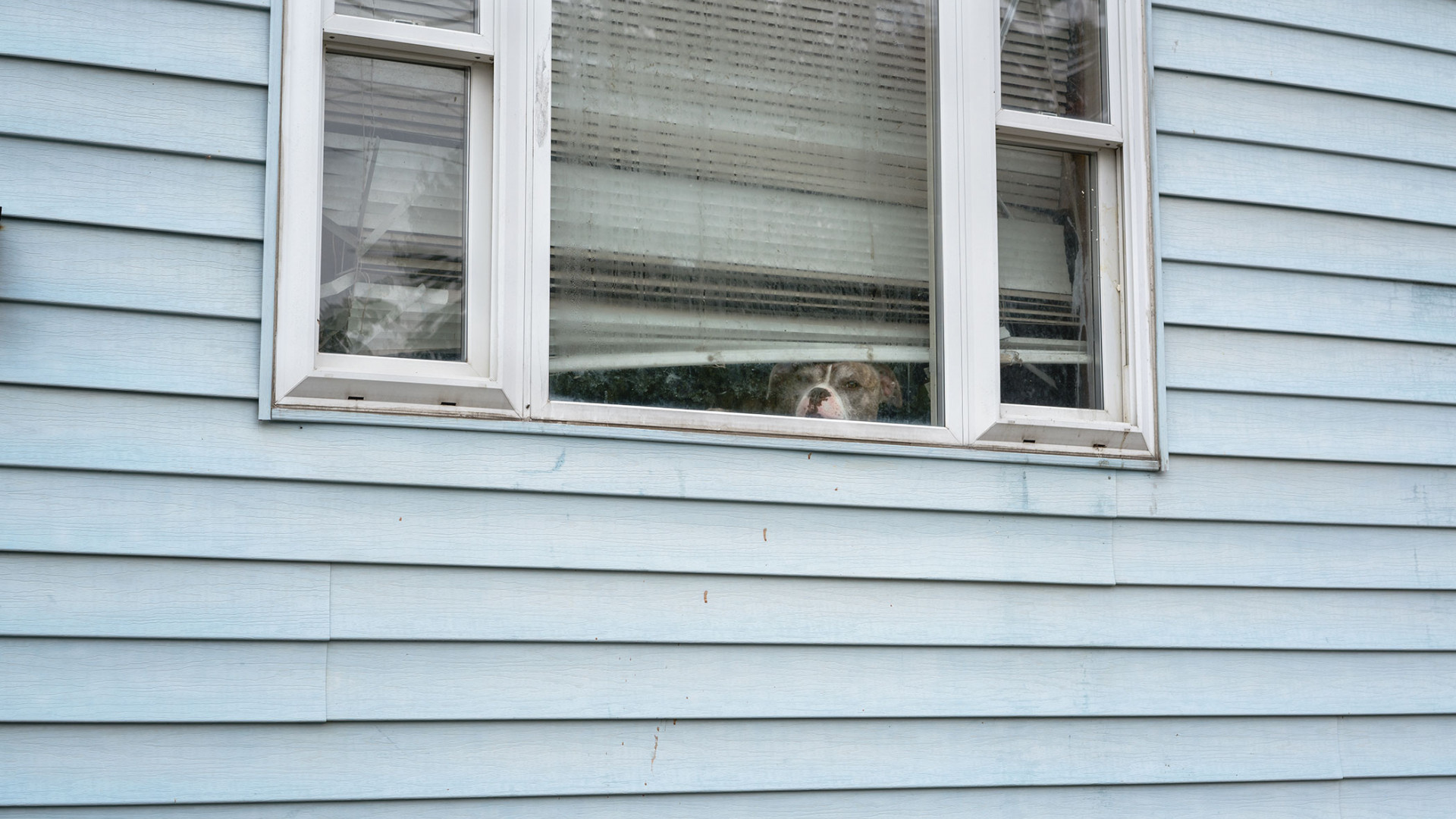 A dog staring out of a window at the camera
