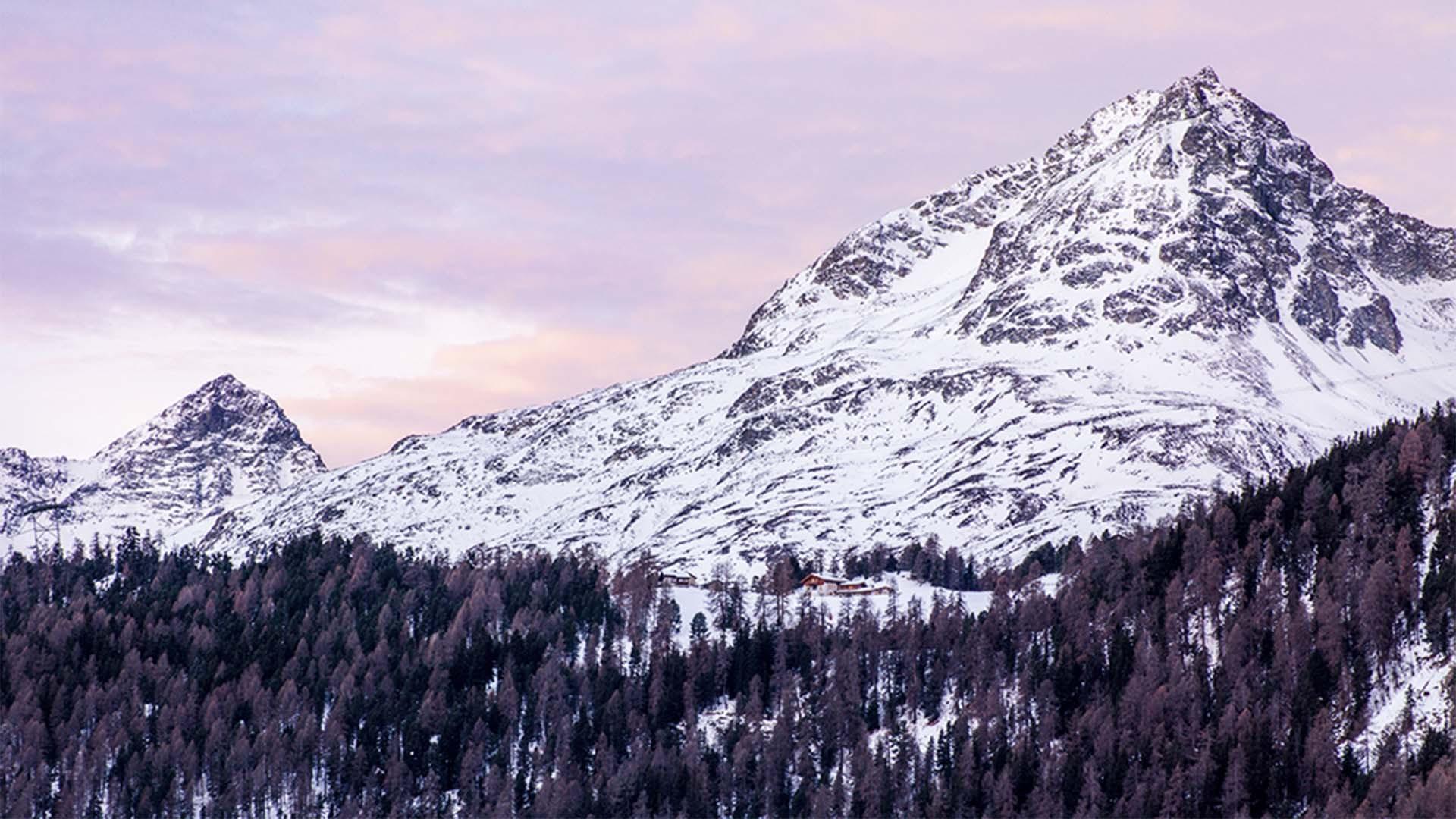 Forests below Piz Julier, Switzerland