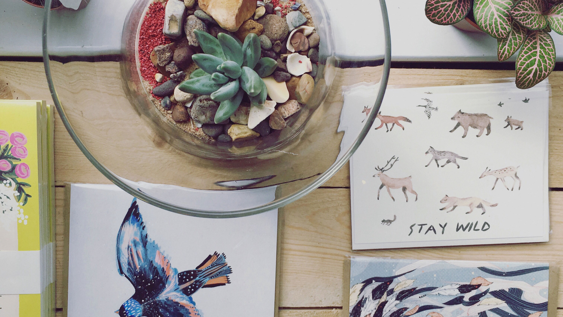 Plants and cards at NGNG design in Exeter