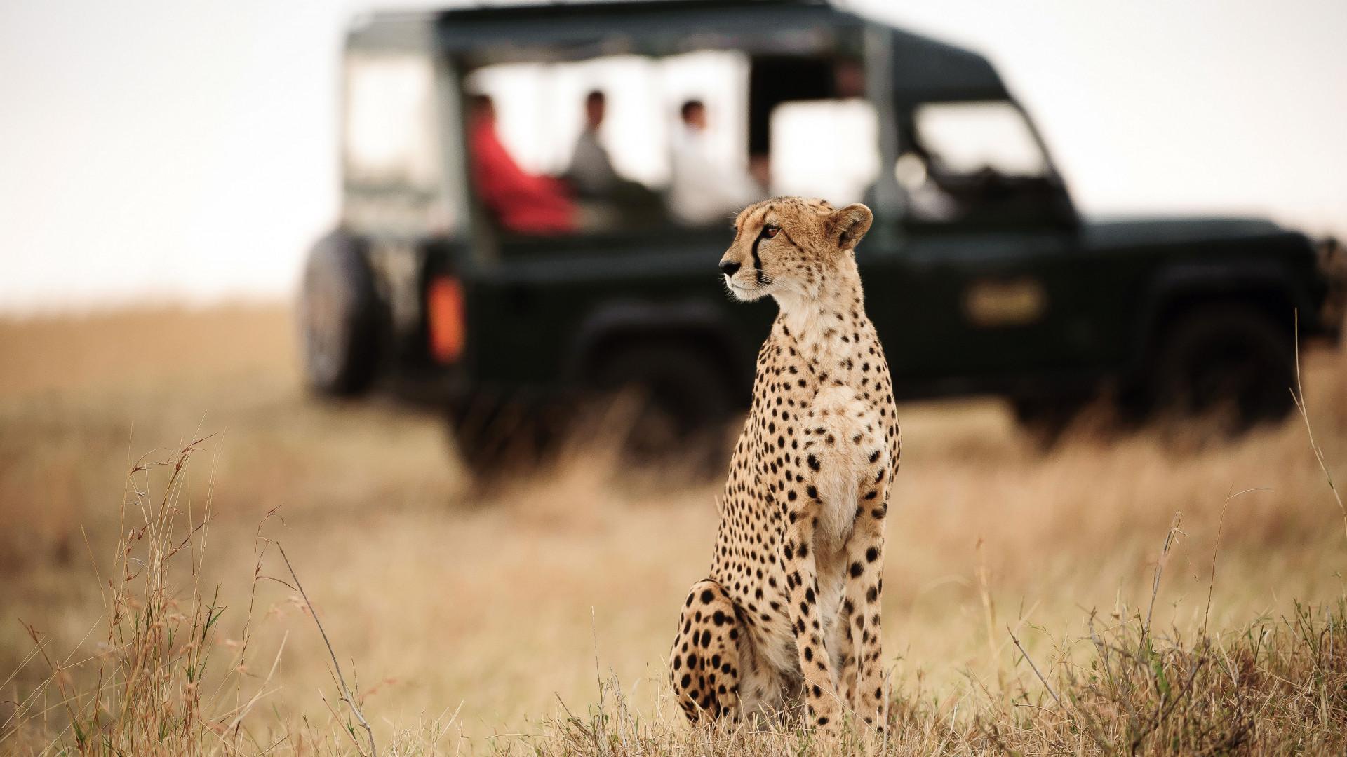 Leopard on safari in Kenya