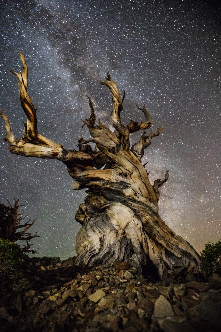 Gnarled tree against starry sky