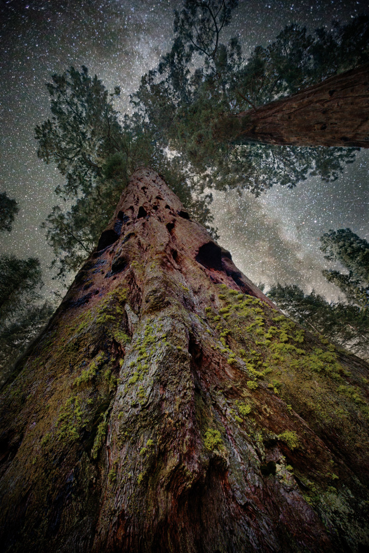 Moss covered trees against starry sky