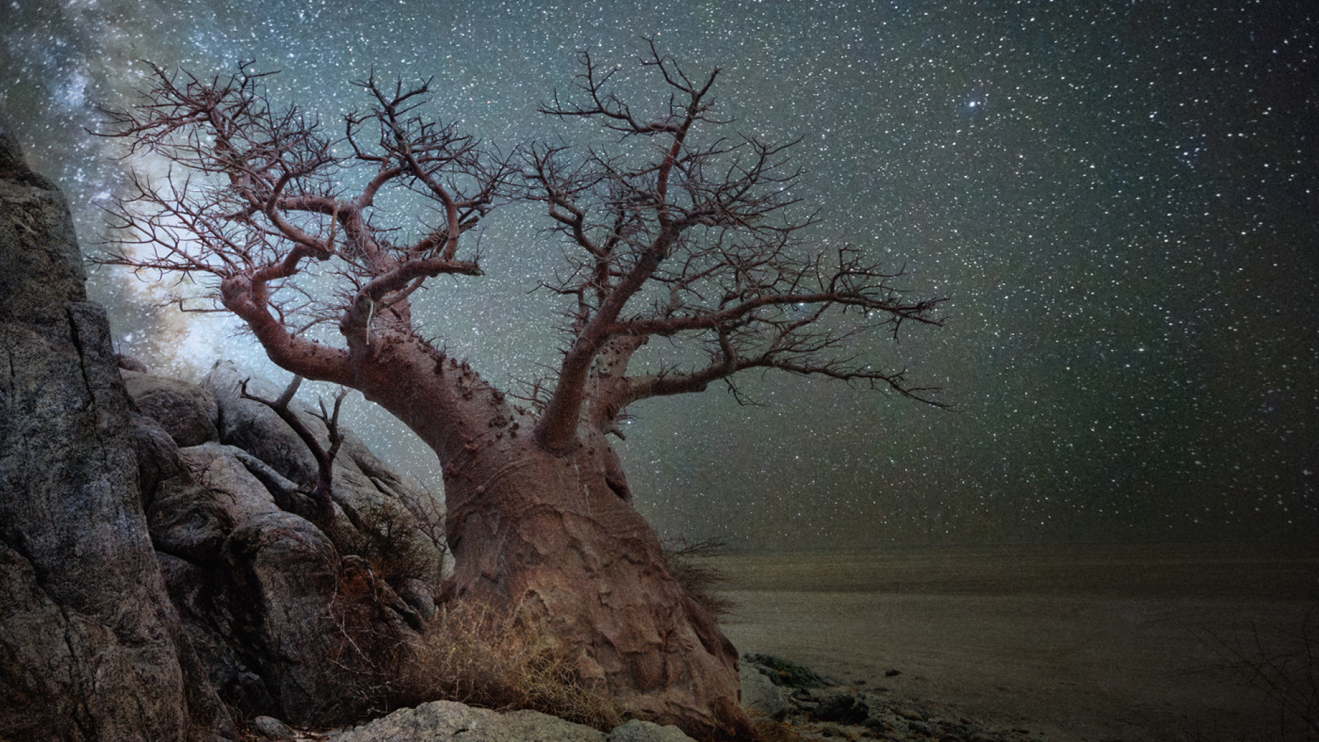 Baobab tree set against starry skies