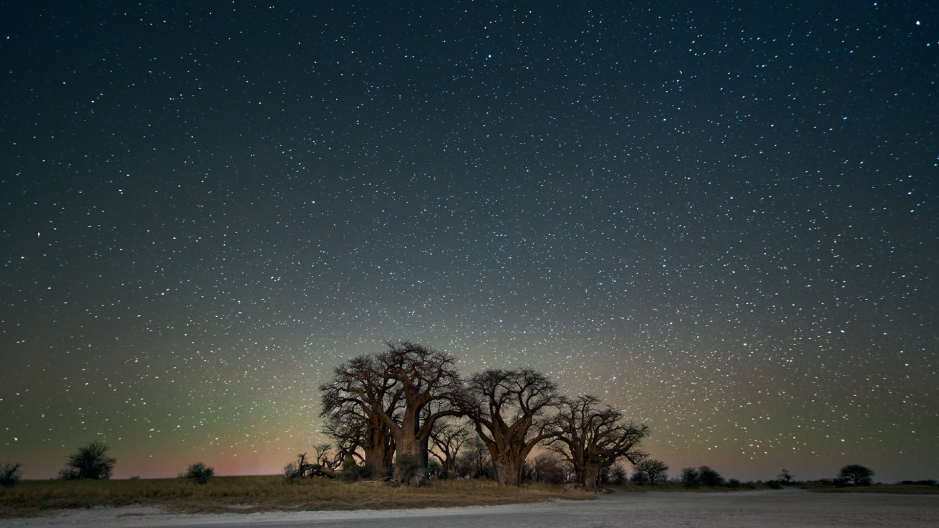Trees set against starry night sky
