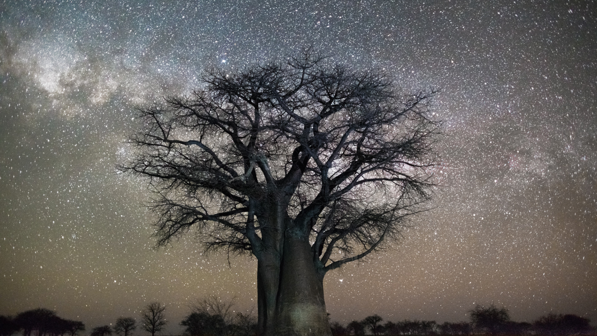 Tree against starry night sky