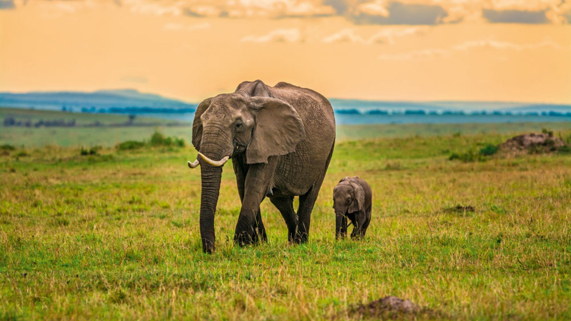 Elephants in a Kenyan game reserve