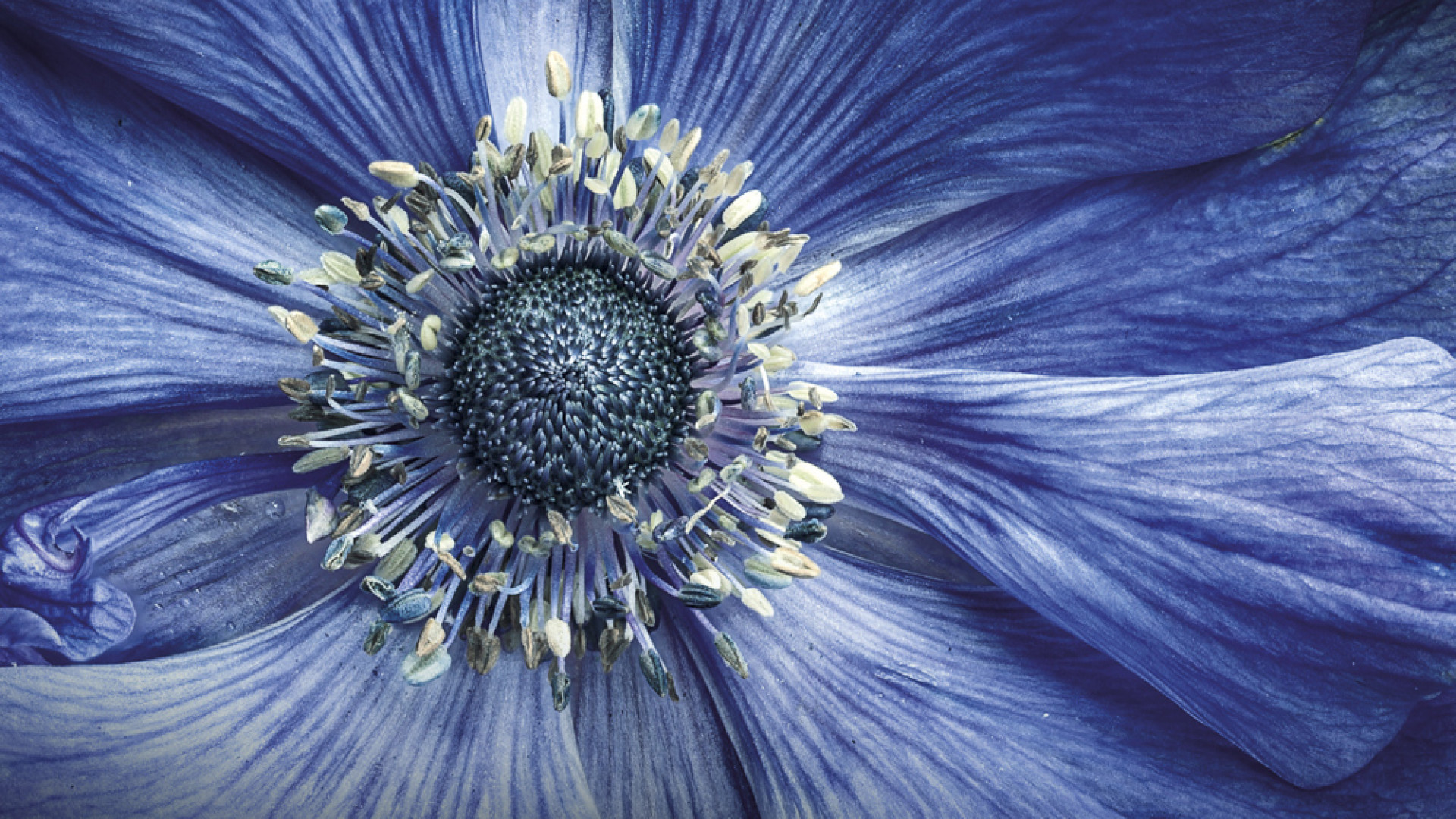 Close-up of an anemone on a balcony in Manchester, UK