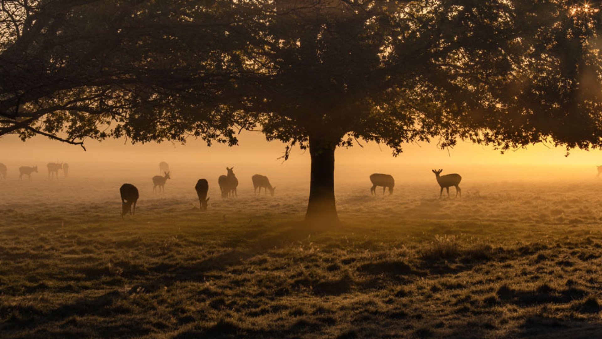 Roe deer in the morning misty at Richmond Park, west London