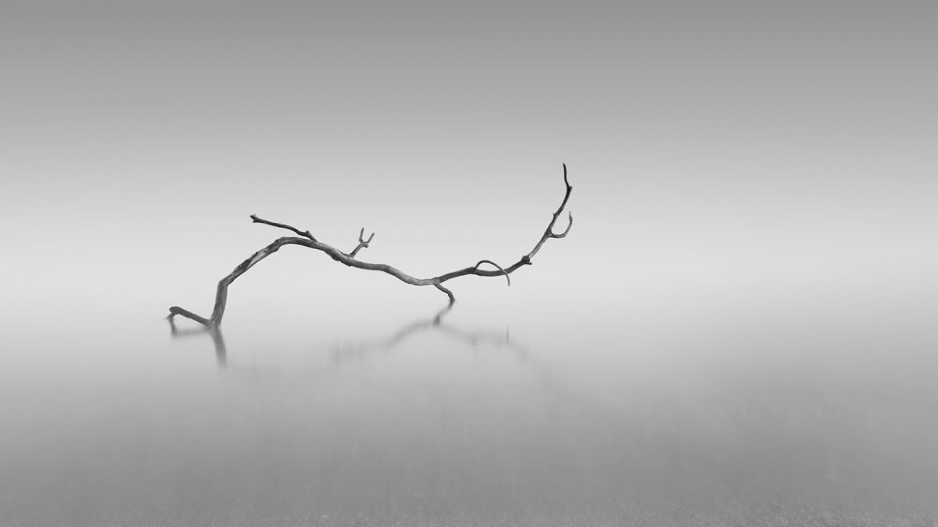 Surreal twisted branch lying on the sand of a beach near Plymouth, England