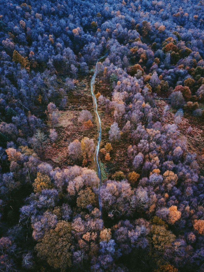 Drone photo of woodland tracks near Sheffield, Yorkshire
