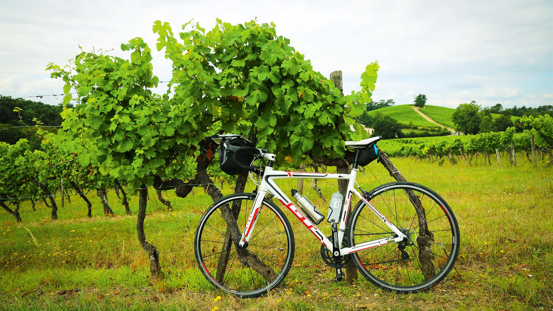 Bike parked in a vineyard, Bordeaux, France