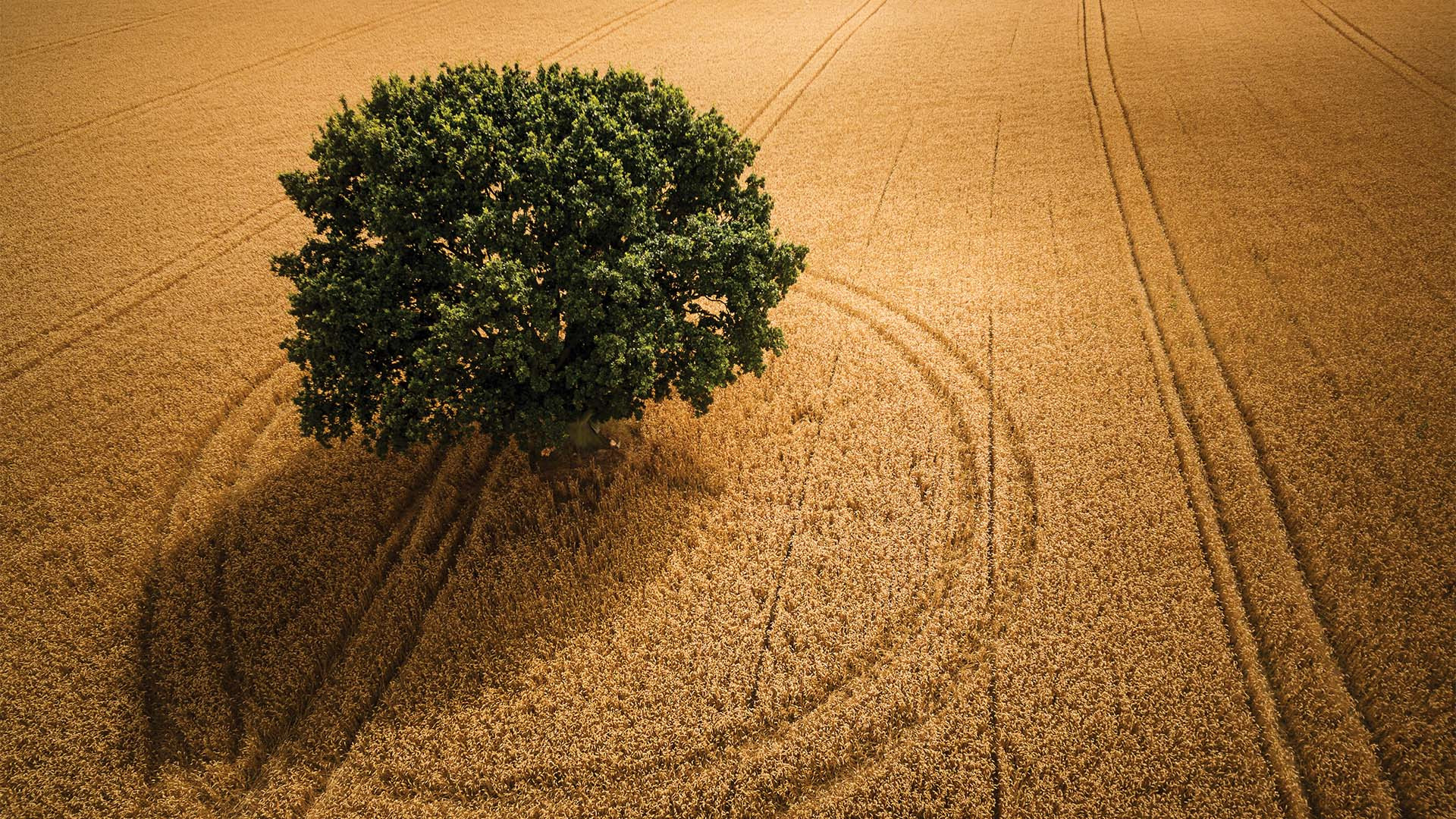 Tracks around a tree in Yorkshire from Drone Photography Masterclass