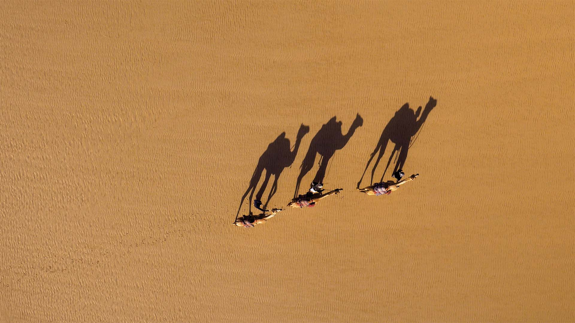 Drone photo of camels and shadows in Oman from Drone Photography Masterclass