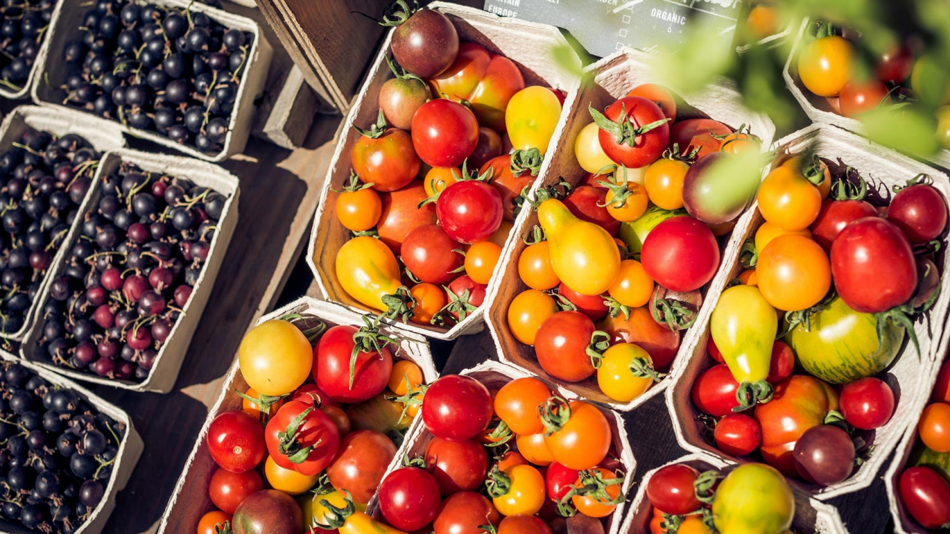 Tomatoes at Daylesford