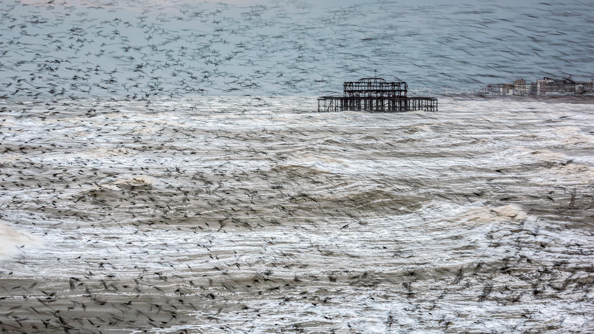 A murmuration of starlings in Brighton