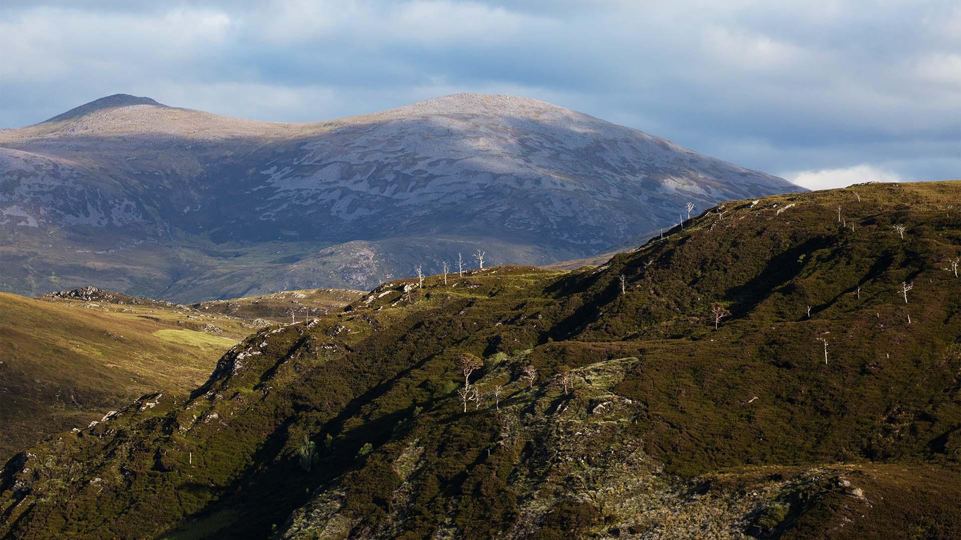 Landscape Alladale, Scotland