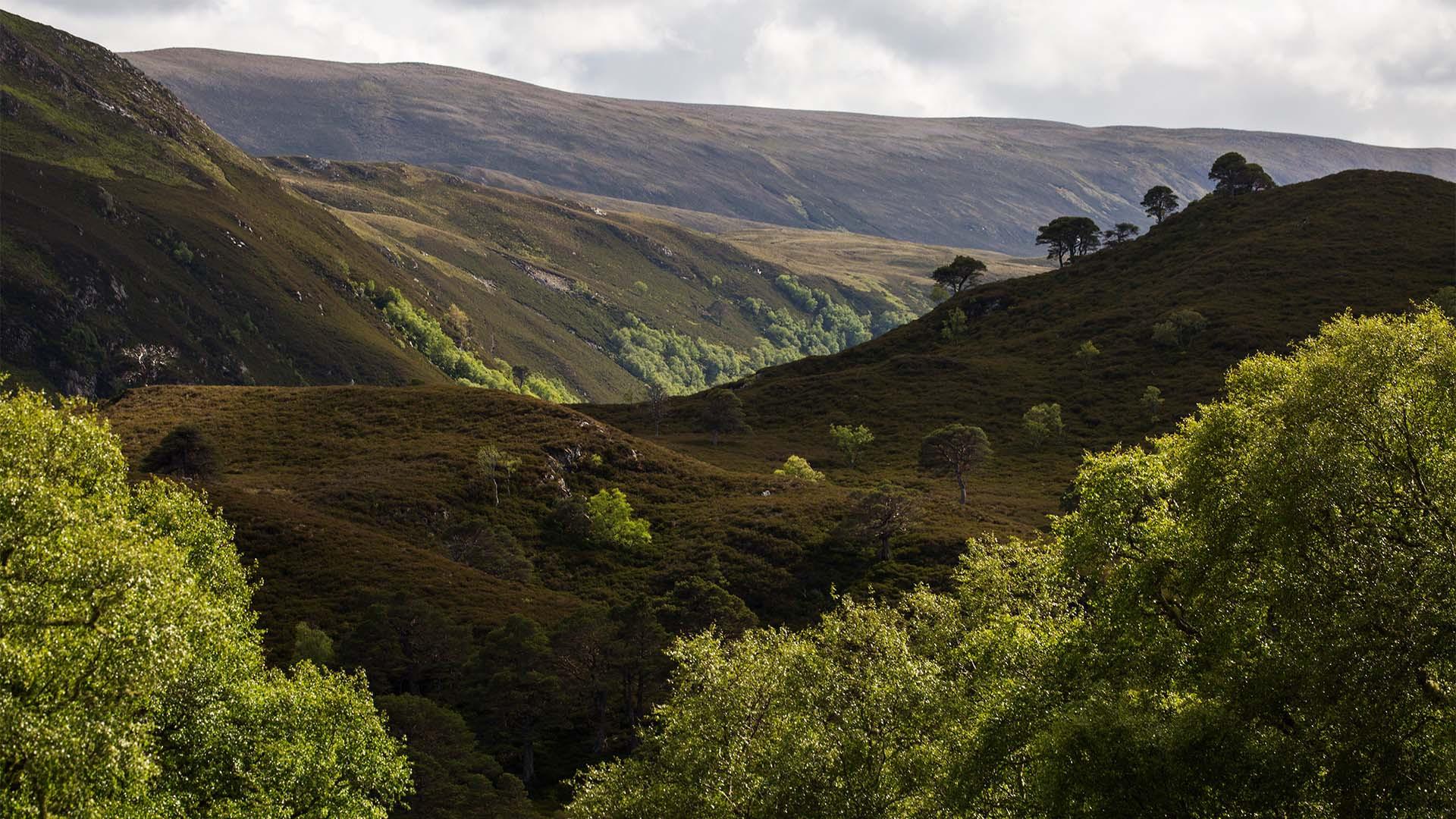 Landscape shot, Alladale, Scotland