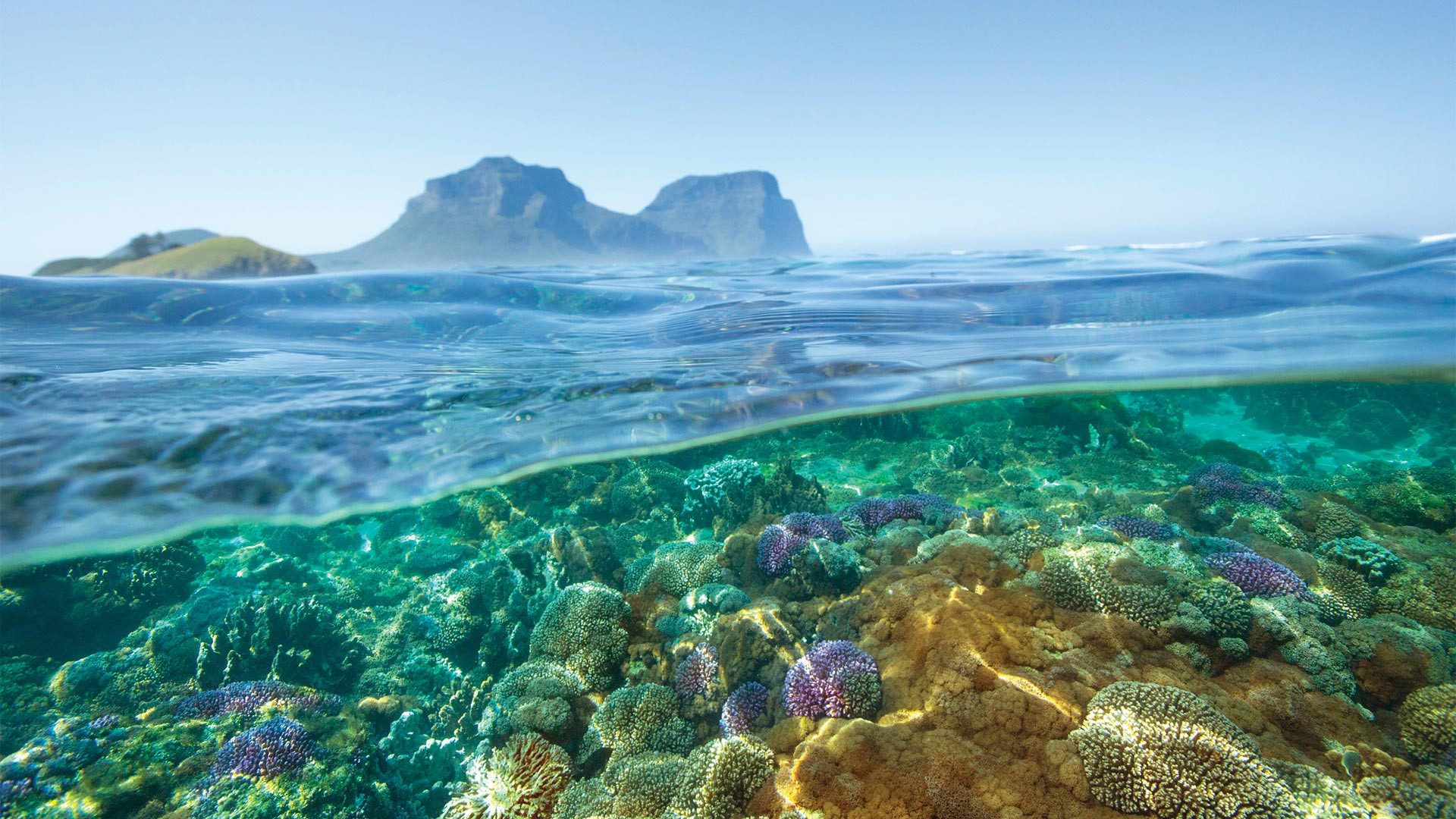 Coral off Lord Howe Island, NSW