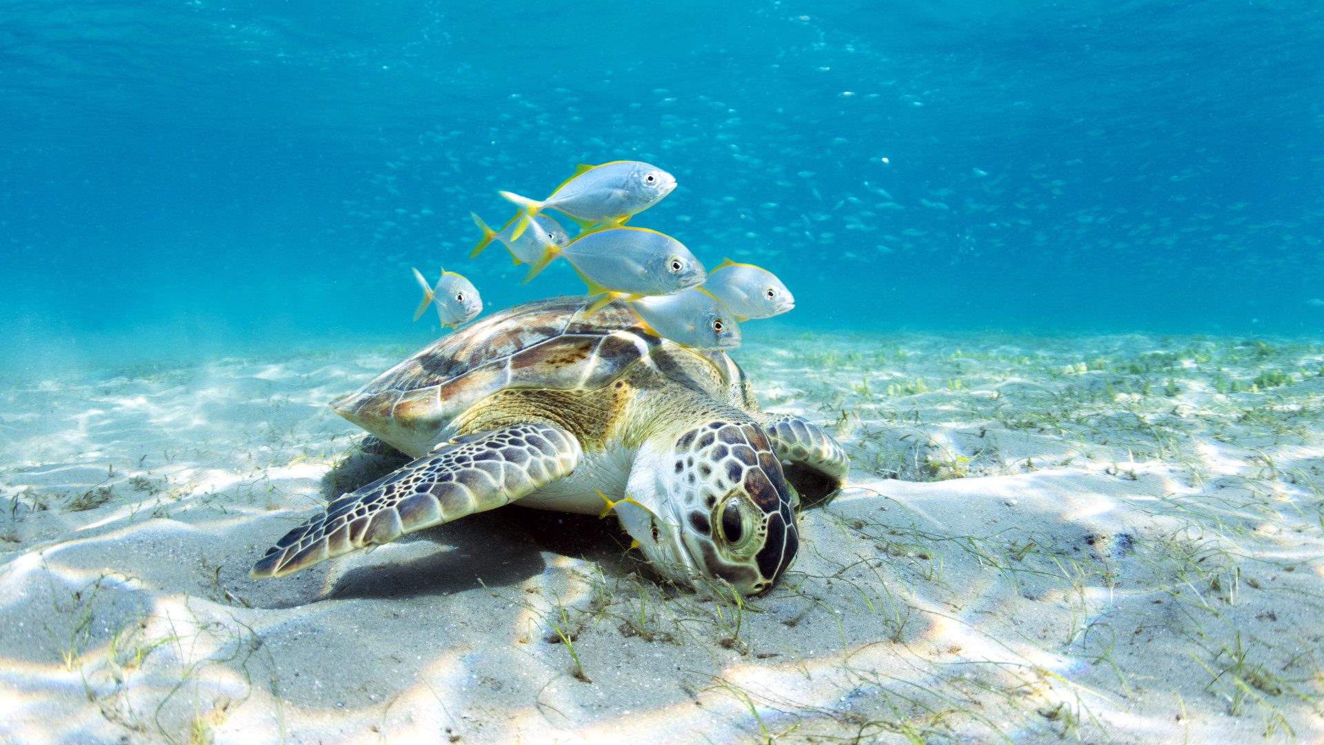 Sealife in Palm Beaches, Florida