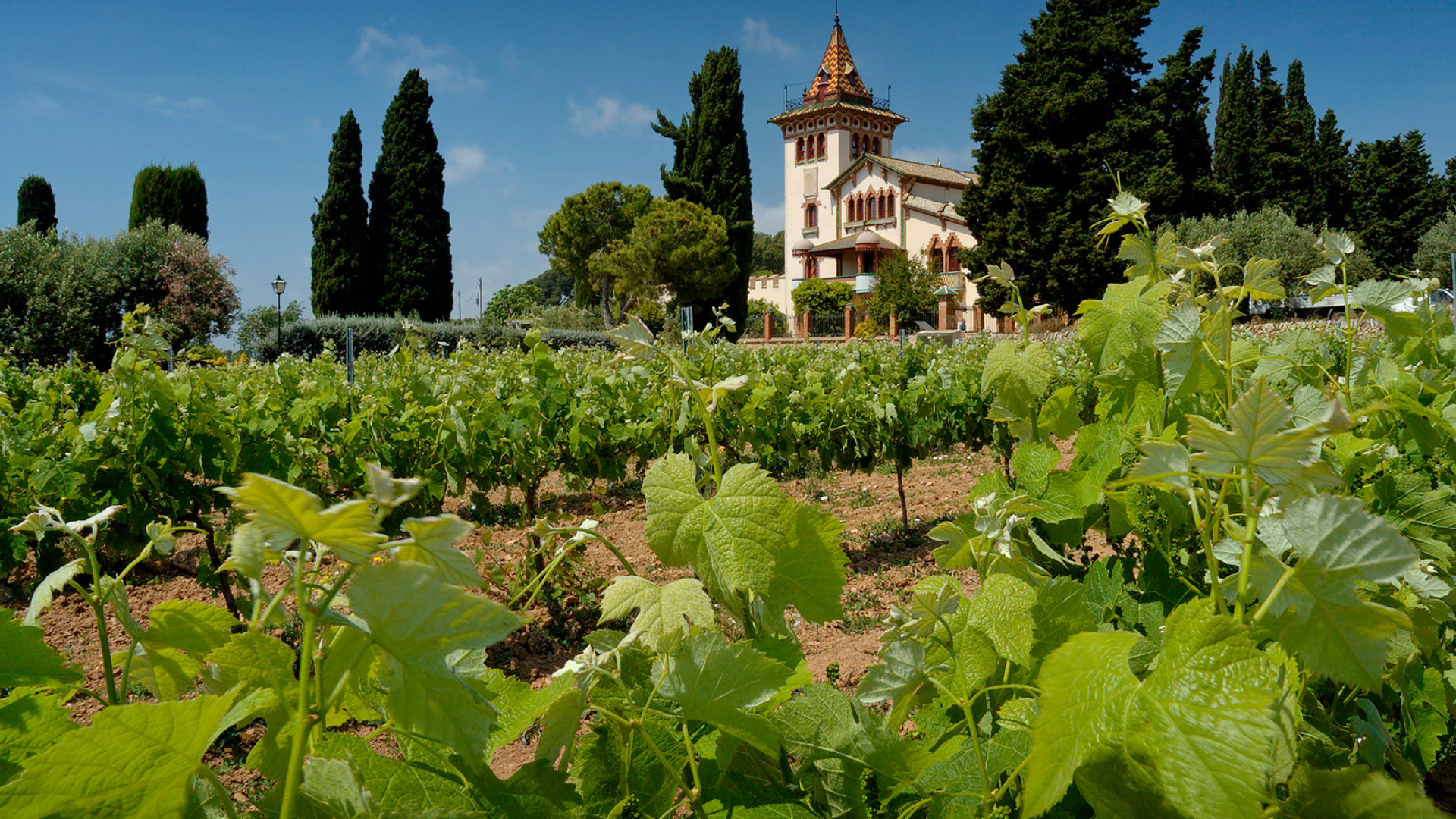 Vineyard and chateau in Catalonia