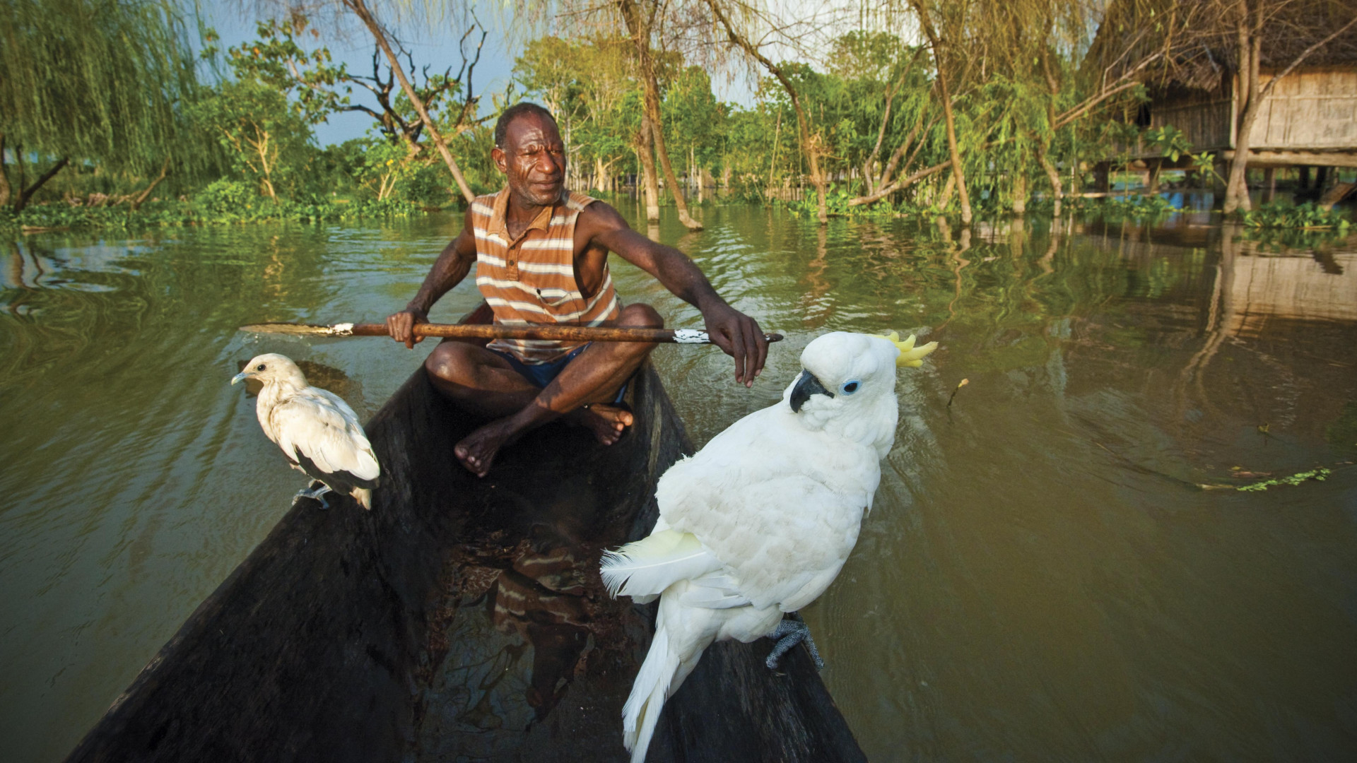 A local paddling on the Sepik river