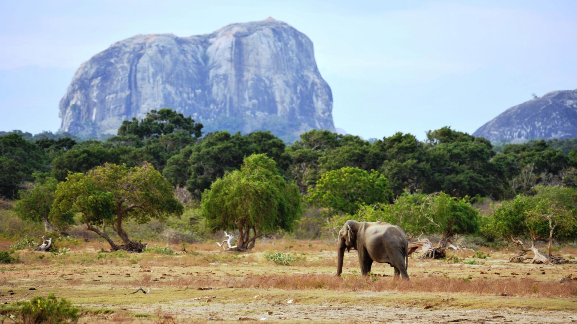 An elephant in Yala National Game Reserve, Sri Lanka