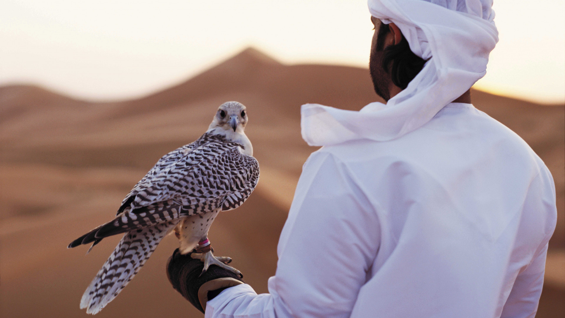 A falconry demonstration in Abu Dhabi's Empty Quarter, UAE