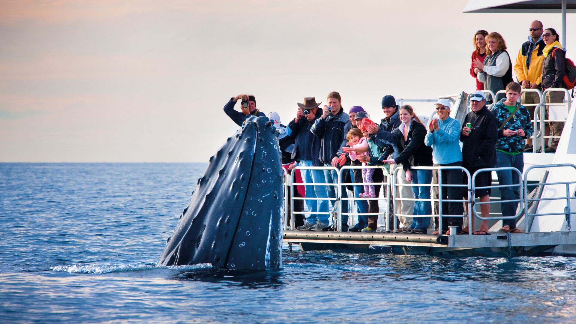A whale off Australia's coast