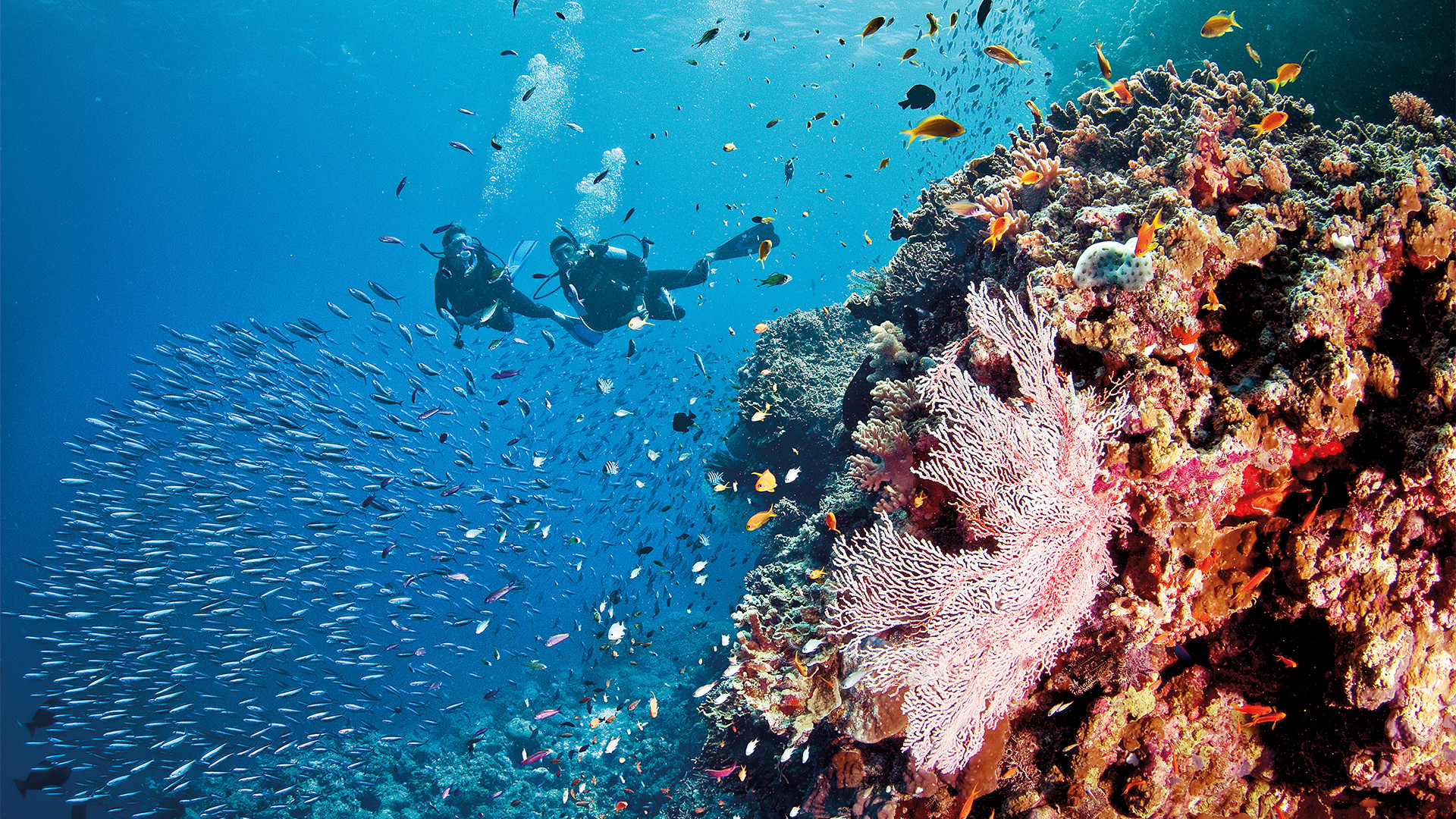 Australia's celebrated diving