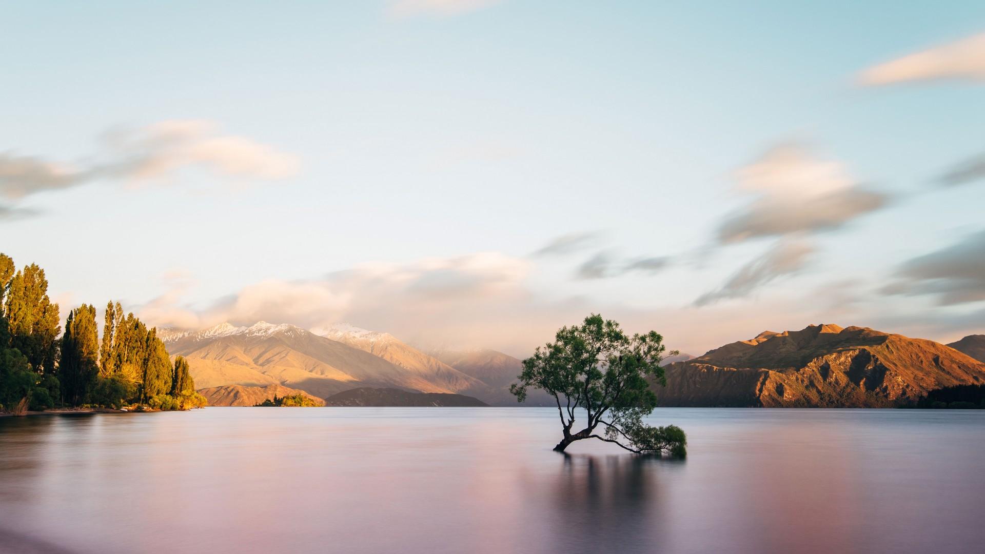 Famous tree at Lake Wanaka in New Zealand